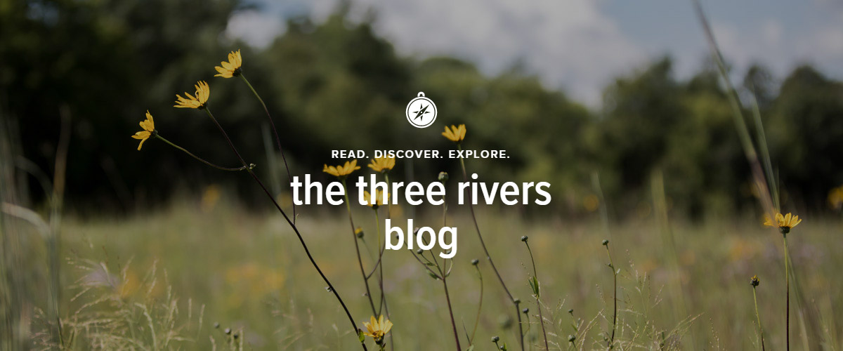 "A grassland with small yellow flowers. Text over the image says ""the three rivers blog."""