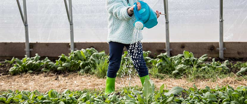 girl watering seedlings in a greenhouse