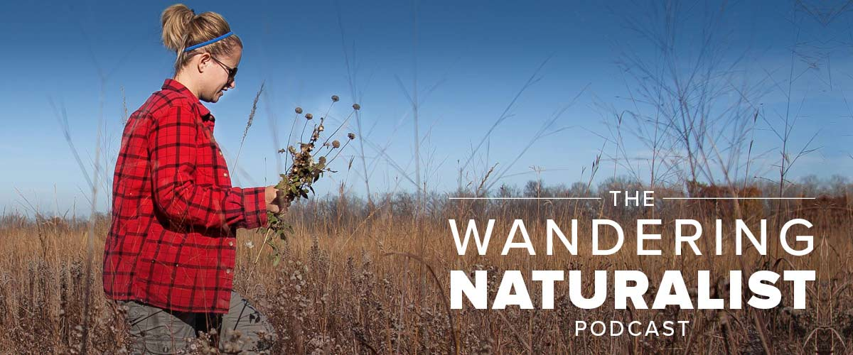 "A woman in a red shirt holds dried plants as she walks through a prairie. Text reads ""the wandering naturalist podcast."""