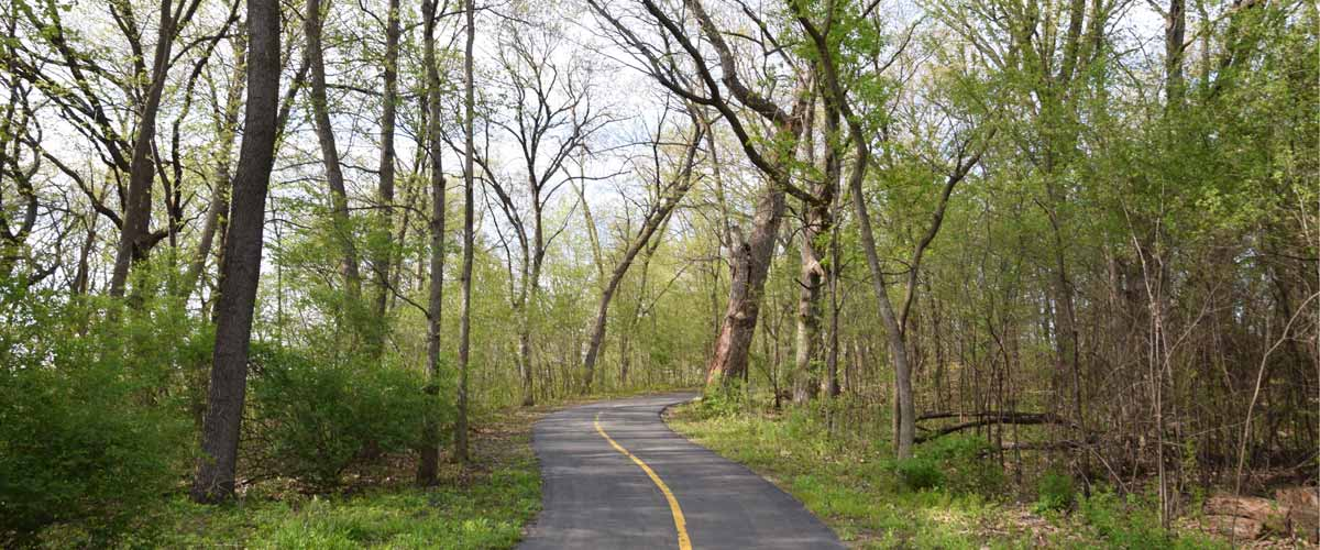 A paved trail cuts through the woods.