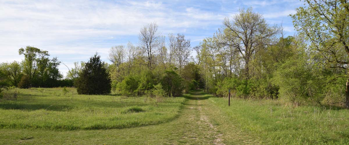 A grassy trail opens up into a grassland area.
