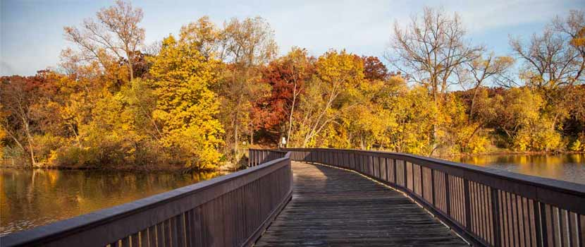 A wooden bridge leads to a lake shoreline of trees that have changed yellow and red in the fall.