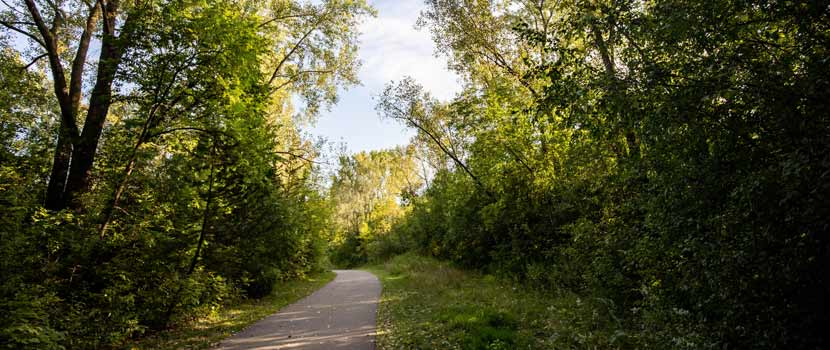 A paved trail cuts through the woods in the summer.