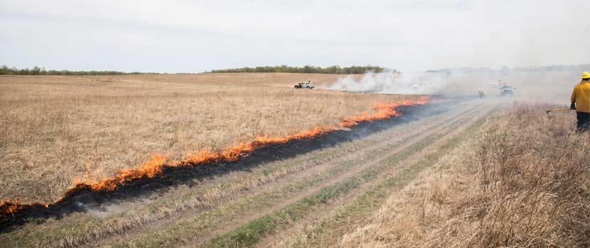 Flames travel across a prairie as Three Rivers carries out a prescribed burn.