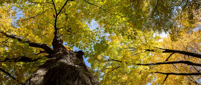 Blue sky peeks through a forest canopy that is starting to turn yellow and orange in the fall.