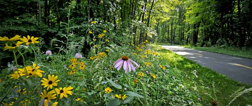 wildflowers in bloom along a paved trail