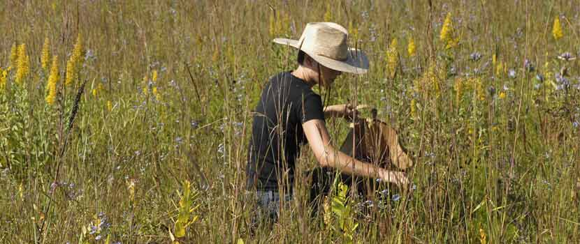 person collecting seeds in a prairie