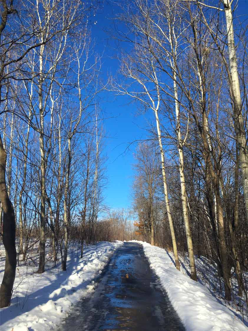 A paved trail separates rows of aspen and other trees in the winter at French Regional Park.