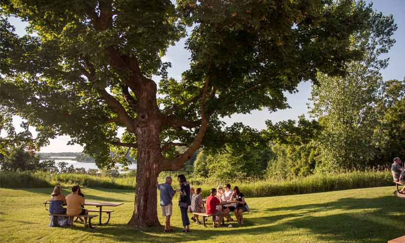 A group of people gather at a picnic table under a tree.