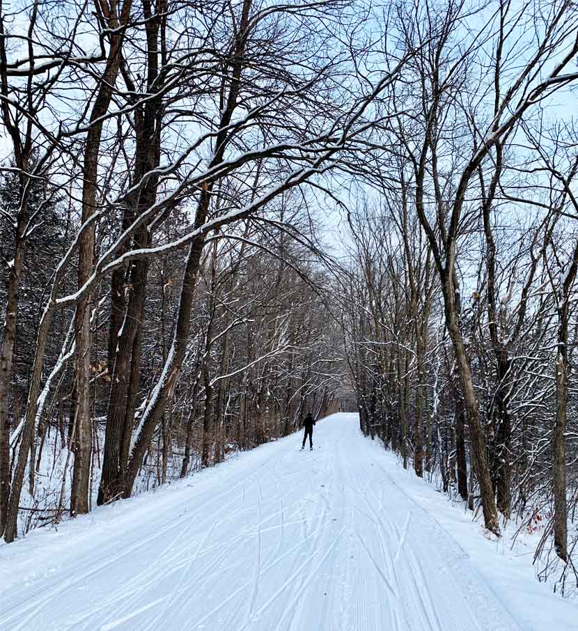 A cross-country ski trail cuts through a dense maple forest.