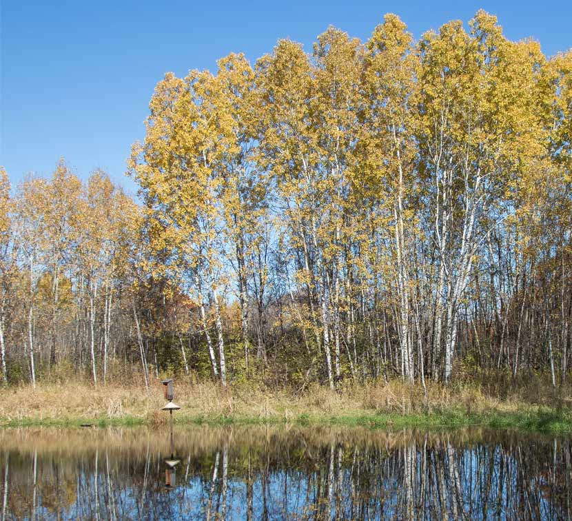 A wooded bird nest box is suspended over a lake with tall aspen trees on the shore.