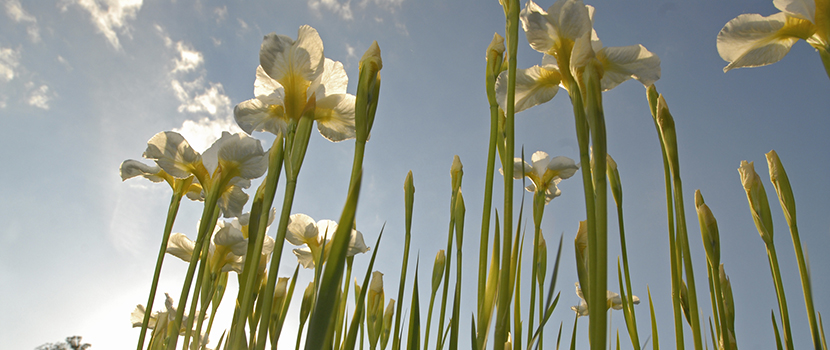 tall flowers in the sun