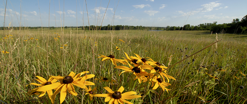 Wildflowers bloom on a wide prairie