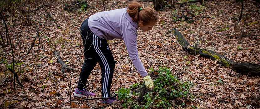 A young girl pulls invasive species and places them in a pile