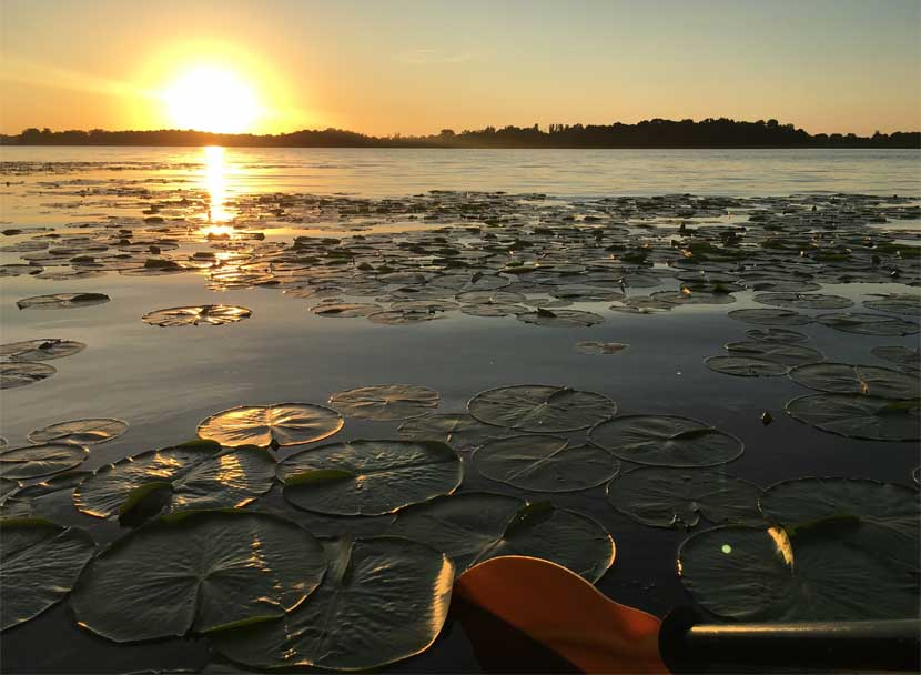 A sunset over a lake. Lily pads and a kayak paddle are in the foreground.