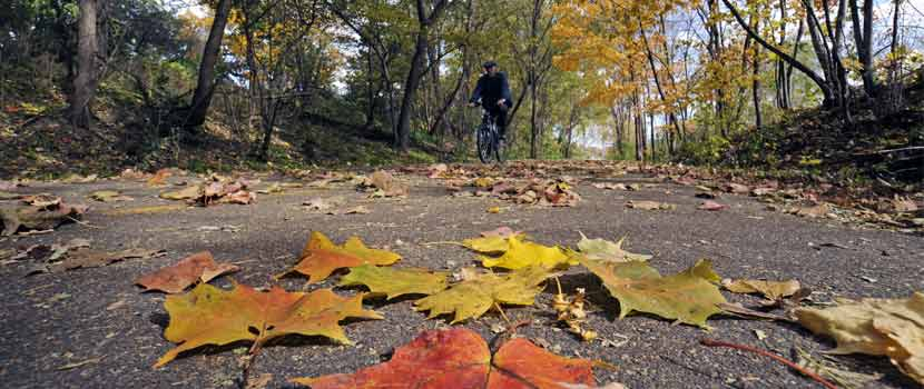 fall leaves on a paved trail