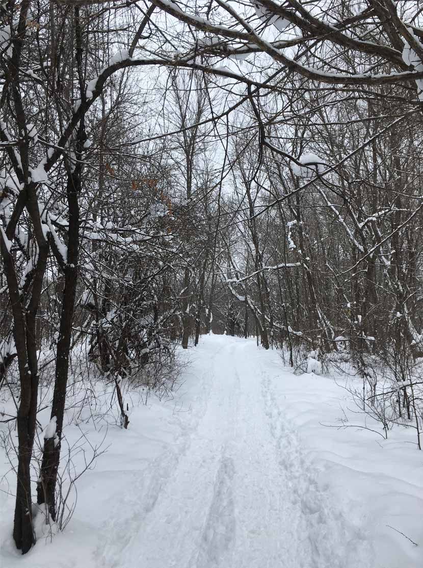 A snowy trail with freshly packed tracks cuts through dense woods at Elm Creek Park Reserve.