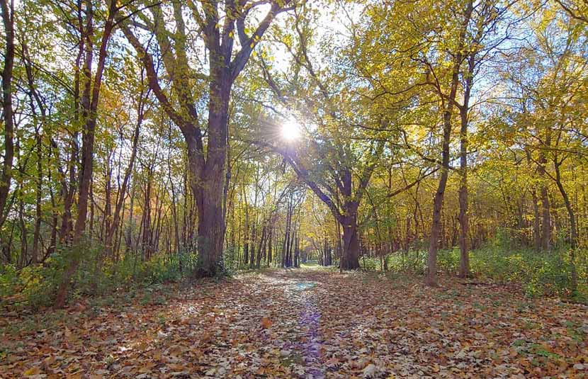 The sun shines through the trees on a wooded trail in the fall.