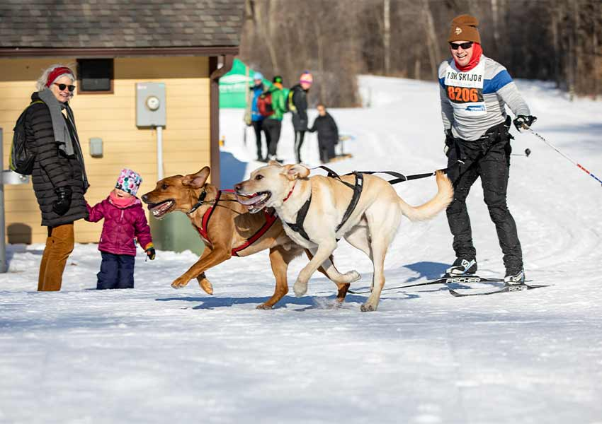 A skijorer with two dogs is racing around a corner as a woman and young child stand in the back and watch.