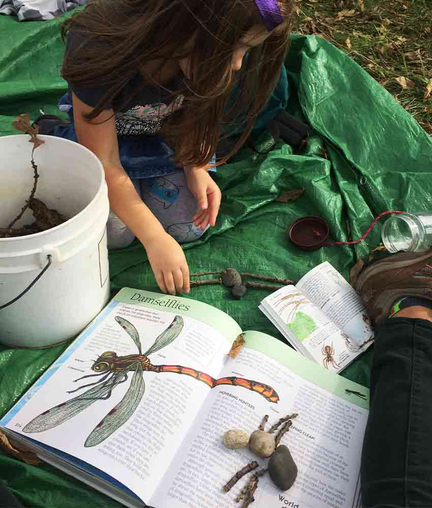 girl reading about damselflies