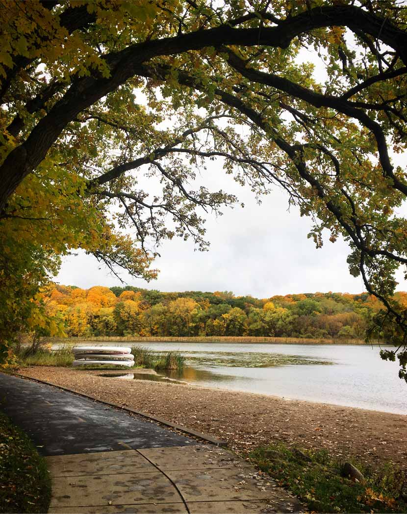 A paved trail cuts along the shore of a lake on a gray fall day. The image is framed by a large oak tree and colorful trees can be seen across the lake.