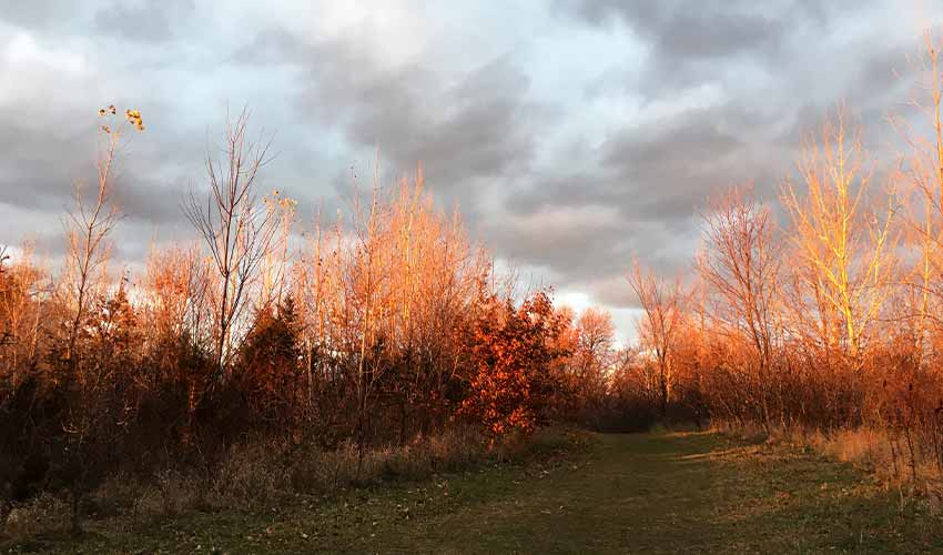 Trees around a grassy trail are tinted red during golden hour.