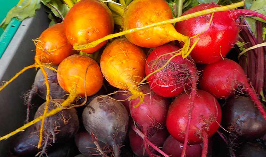 colorful radishes up close