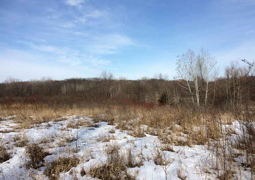 snowy wetland area along a wooded horizon in the early spring of Maple Grove, Minnesota