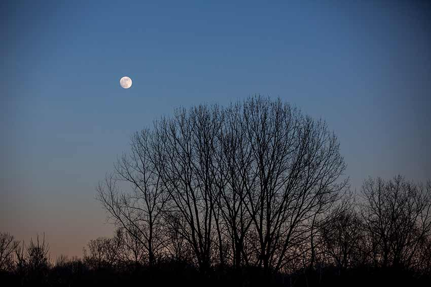 moon rising over a tree silhouette