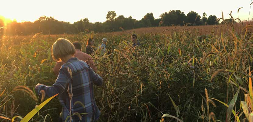 volunteers collecting seeds in a prairie at sunset