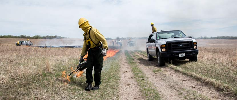 a staff member burns a prairie with a torch while trucks are nearby.
