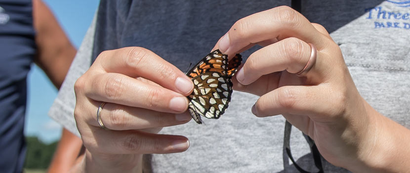 an orange, white and black butterfly being held in two hands