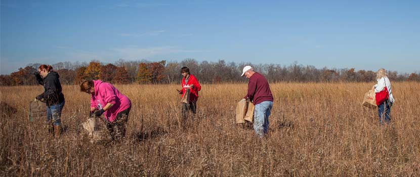 group of people collecting seeds in a grassy prairie
