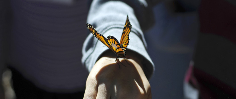 monarch butterfly perched on an open hand